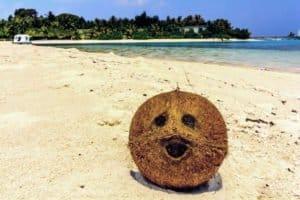 cocotier sur la plage des Maldives